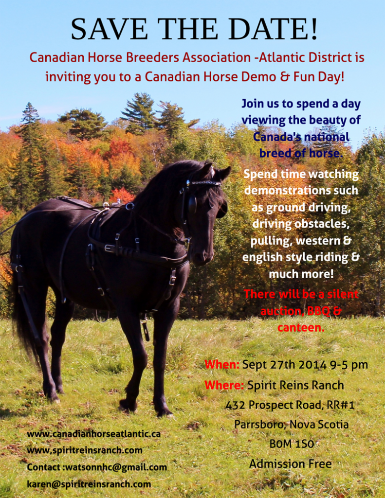 Canadian Horses on display September 27, 2014