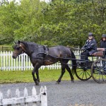 Ruthanne and Don head back to the stable with Lily