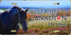 Canadian Horse license plate-lowres