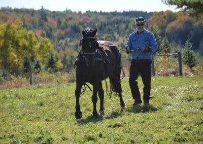 Fred McGill & Sadie demonstrate ground driving the young horse.